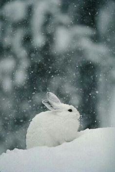 This cute little bunny is having a White Christmas :)