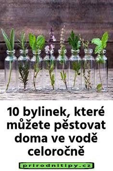 10 bylinek, které můžete pěstovat doma ve vodě celoročně Korn, Dna, Glass Vase, Health Fitness, Garden, Scrappy Quilts, Herbs For Health, Garten, Lawn And Garden