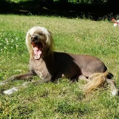 Monday Mood - feeling these yawns today! Dog Life, Cute Dogs, Mood, Animals, Instagram, Animales, Animaux, Animal, Animais