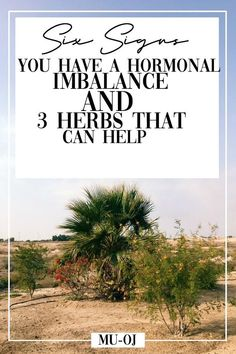 Here are 6 common signs you have a hormonal imbalance condition like PCOS. Plus, get my guide that shares 3 herbs that can help balance your hormones! Click through to read the post Health And Wellbeing, Women's Health, Estrogen Dominance, Natural Acne Treatment, Menopause Symptoms, Pcos Symptoms, Hormone Imbalance, Hormonal Acne, Hormone Balancing