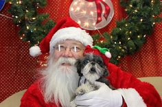 Omg! - This shih-tzu isn't having none of this Santa business! The expression on its face! Pure terror....lol.