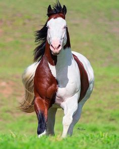 All The Pretty Horses, Beautiful Horses, Animals Beautiful, Horse Photography, Creative Photography, Nature Photography, Some Beautiful Images, Most Beautiful, Horse And Human