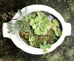 DIY- Lovely Water Garden