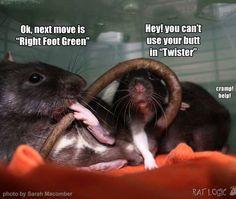 Rats Funny Rats, Cute Rats, Funny Animal Memes, Funny Animals, Pet Rodents, Rat Toys, Baby Friends, Super Cute Animals, Cute Animal Pictures