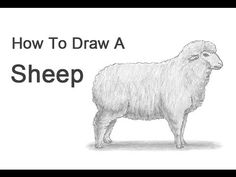 How to Draw a Sheep-- perfect for St.. Agnes