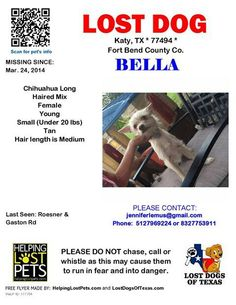 #lostdog #Katy #TX Bella is a long-haired Chihuahua missing since March 24, 2014