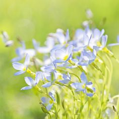Clouds At Our Feet by Lala Lands, via Flickr. Azure Bluets.