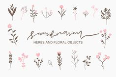 Scandinavian - Herbs and Flowers by Paperly Studio on @creativemarket  --  FREE until Sunday, 09/03/2017.