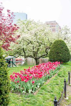 Boston, spring, summer, tulips, city scene, colors, blogger