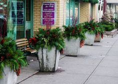 In winter, Urban Garden can design a whole new look to match budgets and tastes. Christmas Planters, Forest Hill, Love Design, Outdoor Rooms, Container Gardening, Commercial, Sidewalk, Creativity, Yard