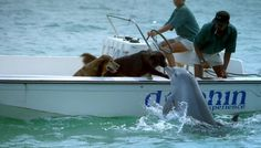 unlikely animal friendships... Dogs & dolphin best friends <3