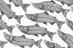 Sockeye Salmon line drawing - West Coast Wildlife Illustrations on Behance by Sandy Pell and Steve Pell of Pellvetica. See the full set: https://www.behance.net/gallery/29874875/West-Coast-Wildlife-Illustrations