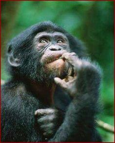 macaco rezando - Pesquisa Google