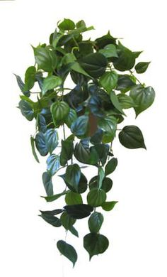 Trailing Philo Ivy - Artificial Plants and Trees - Big Plant Shop Ivy Plants, Fake Plants, Hanging Plants, Hanging Baskets, Artificial Green Wall, Artificial Plants And Trees, Fake Ivy, Ivy Look, Interior Plants