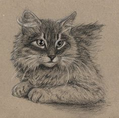 Cat by Ankhes-Nur on DeviantArt