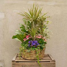 Regalar una cesta con plantas y flores variadas es siempre una buena opción si lo que buscas es que dure mucho tiempo. En Bourguignon te proponemos este llamativo centro con plantas y flores de temporada, como begonias, san paulias y kalanchoes.