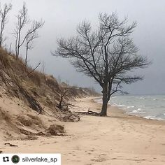 Sometimes the trees want to take a 'walk' along the beach too  #mibeachtowns #Repost @silverlake_sp with @repostapp ・・・ Standing tall. #silverlake #silverlakesanddunes #nature #lakemichigan #puremichigan #mistateparks #miparks #midnr