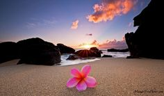 Plumeria by the Sea | Hawaii Pictures of the Day