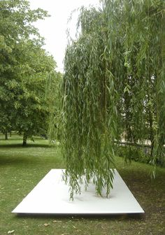 Tim Knowles   Tree Drawings-2006 50 pens suspened from the branches of a Weeping Willow tree create a drawing on 4 panels placed horizontally beneath the tree.  The drawing is accompanied by a looped video of its production.