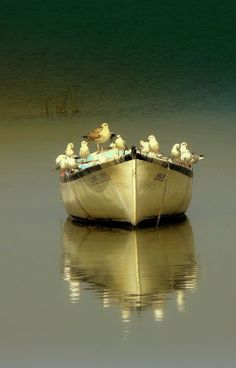 """""""captain and crew"""" by BLUE OLRİC - birds or seagulls on a row boat Beautiful Birds, Beautiful Pictures, Mirror Image, Mirror Mirror, Belle Photo, Great Photos, Sailing, Reflection, Art Photography"""