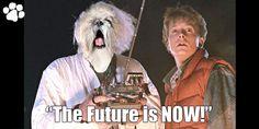 Christopher Lloyd films guest appearance on The Michael J Fox show Netflix Movies, Sci Fi Movies, Good Movies, Best Sci Fi Movie, The Best Films, Travel Movies, Time Travel, Doc Brown, Michael J Fox