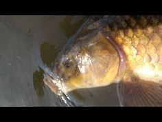 Carp Fly, tying the conker (carp zonker)..it's also good for bonefish too. - YouTube
