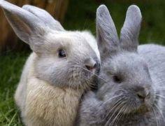 Classic rabbit duo.