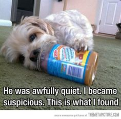 Awfully quiet dog…