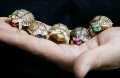 Ninja Turtles :-)