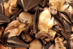 Fruit bats for sale at a food market in Brazzavile - JIRO OSE/Newscom/Reuters
