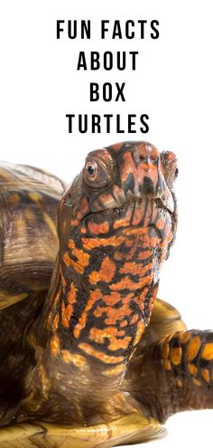 Hottest Free turtles pet box Concepts Little ones have a very organic desire fo. Fun Facts About Turtles, Turtle Facts For Kids, Fun Facts For Kids, Fun Facts About Animals, Tortoise Habitat, Tortoise Care, Tortoise Turtle, Turtle Cage, Pet Turtle