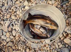 Trout in a Bucket – Mary Pratt. the realism is outstanding. Canadian Painters, Canadian Artists, Mary Pratt, Modern Art, Contemporary, Art Themes, Realism Art, Fish Art, Heart Art