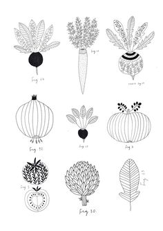 Vegetables. Botanic print. By Ryn Frank www.rynfrank.co.uk