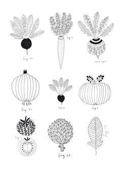 Vegetables. Botanic print. By Ryn Frank www.rynfrank.co.uk