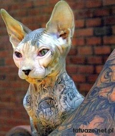 There are pros and cons on tattooing a Sphynx cat. Below are some of them: Pros Some people consider tattooing a Sphynx cat as beautifu. Sphynx Cat Tattoo, Kitty Tattoos, Tattoo Cat, Gato Sphinx, Son Chat, Tier Fotos, Animal Tattoos, Cool Cats, Funny Images