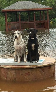 Night In Charleston I Met Katrina Dog >> 40 Best Pictures Of Pets From Hurricane Katrina Images Animal