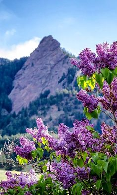 Chautauqua Park - Boulder, Colorado, U.S // Photo by Teryn & Kate Beautiful World, Beautiful Places, Beautiful Scenery, You're Beautiful, Beautiful Pictures, Amazing Places, Beautiful Flowers, Belle Image Nature, Chautauqua Park