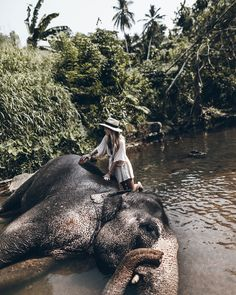 Sri Lanka - Mikuta - Elephant Freedom Project #mikutatravels