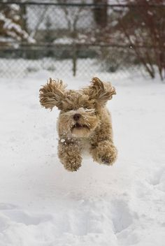 """This snow is cccccold!""...Click here to see this cutie>>> http://www.fundogpics.com/puppy-pics-galore.html"