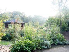 【2015年8月中旬撮影】 しばらく雨が降っていなかったお庭に、恵の雨。空気も澄んで、植物達も喜んでいます^^