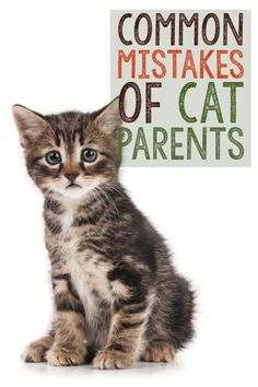 "Although cats have a reputation for being independent animals, that definitely doesn't mean, ""no care necessary."" Even the most experienced cat owners make mistakes. But, avoiding these common ones will result in a healthier, happier cat and a better relationship between you and your furry companion! Here are five mistakes cat owners make."