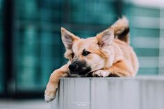 Hunde - Felli Photography - Vicky Fellinger Online Galerie, Dog Photography, Corgi, Animals, Photo Shoot, Corgis, Animales, Animaux, Animal