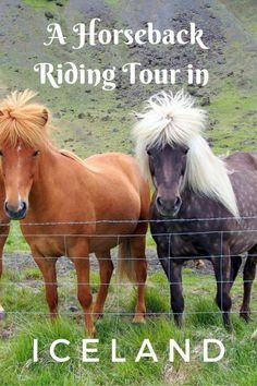 Learn what makes an Icelandic horse unique and tips to a Horseback Riding Tour in Iceland with kids