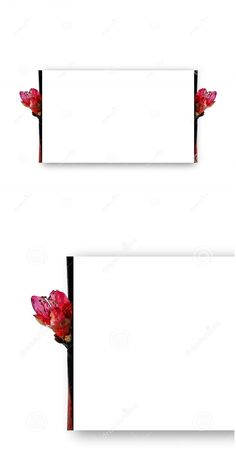 Photo about Frame with pink spring flowers on a rectangular shape with shadow. Useful for invitation or greeting cards. Image of frame, arrangement, business - 178473151 Text Frame, Spring Flowers, Floral, Beautiful Flowers, Pink, Greeting Cards, Shapes, Invitations, Stock Photos