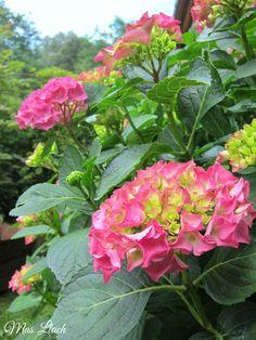 Hortènsies Plants, Flora, Plant, Planting