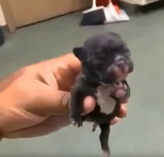Really Cute Puppies, Super Cute Puppies, Baby Animals Super Cute, Cute Wild Animals, Baby Animals Pictures, Cute Baby Dogs, Cute Funny Dogs, Cute Animal Videos, Cute Dogs And Puppies