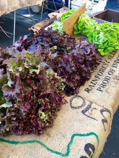 Lettuce at Ojai Farmers Market