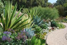 Xeriscaping - doesn't have to mean barren