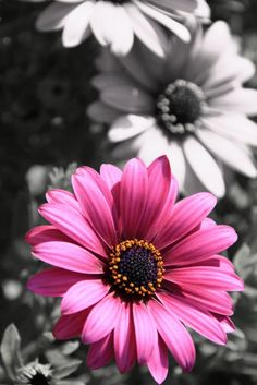 Pink Flower | Very cool photo blog