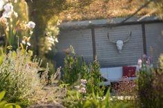 Ein Naturgarten-Sitzplatz im Morgenlicht umgeben von diversen Arzneipflanzen
